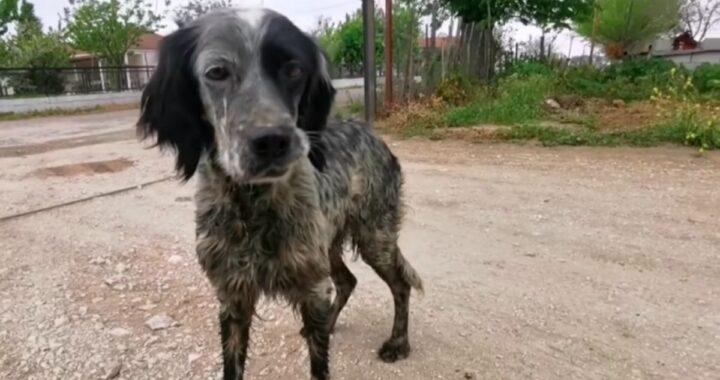 Il salvataggio di una cagnolina randagia e dei suoi cuccioli