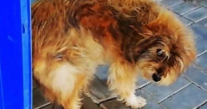 Donna gentile dona una possiobilità ad un povero cane randagio