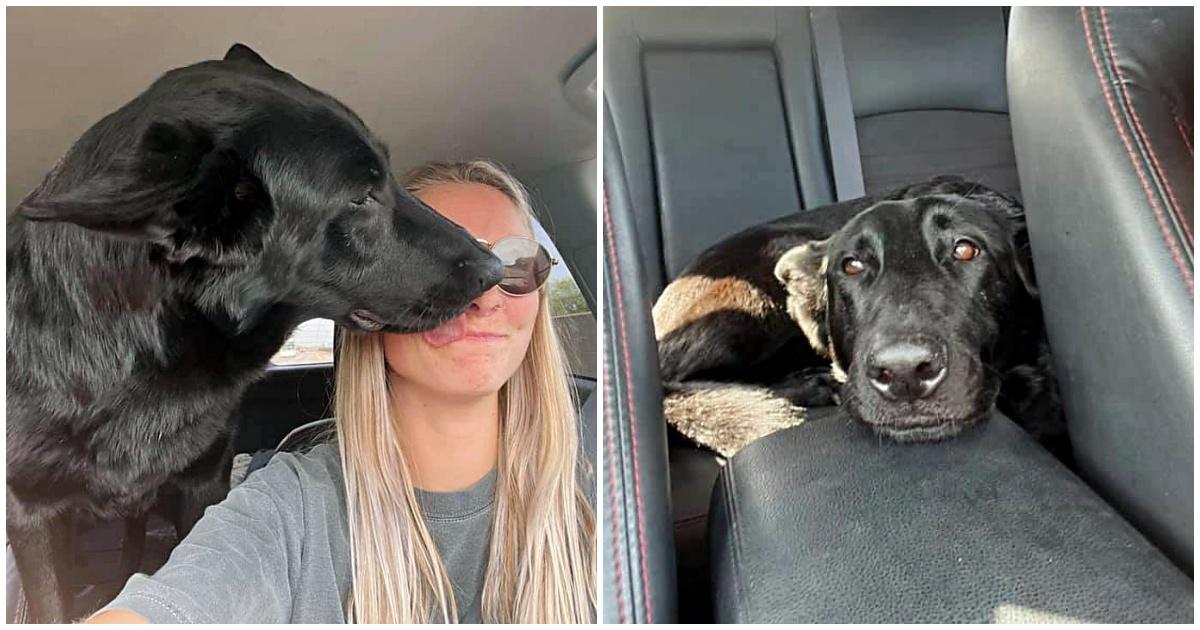 La scomparsa della cagnolina Cass e il suo ritrovamento