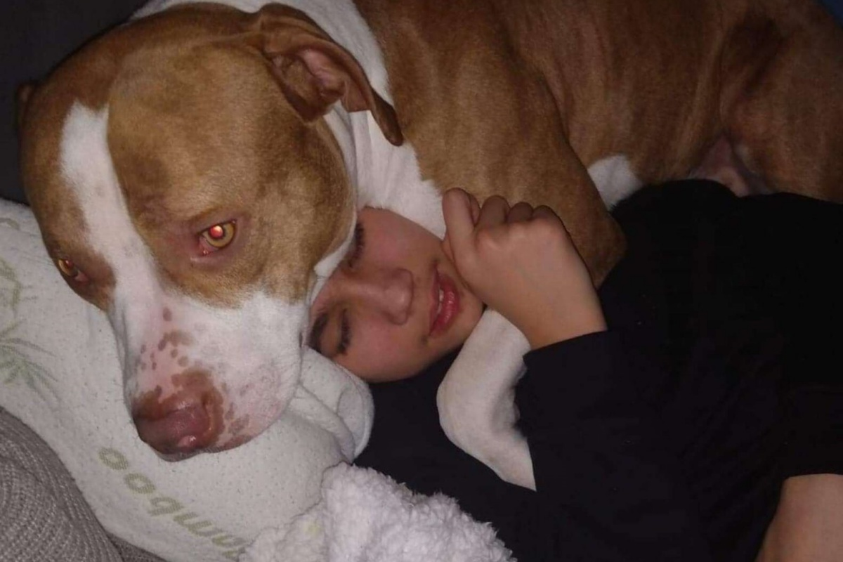 Il cagnolino Charlie salva la vita al suo fratellino umano