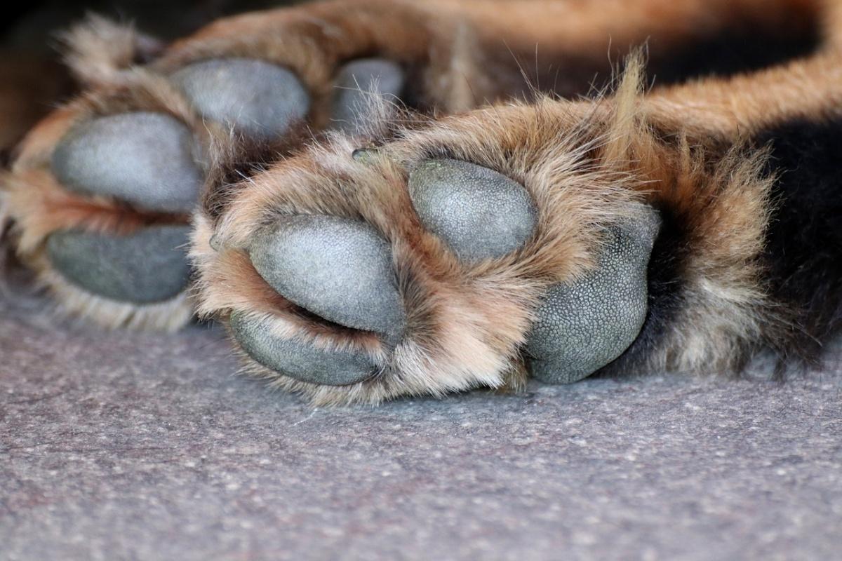La storia del cane Chewe
