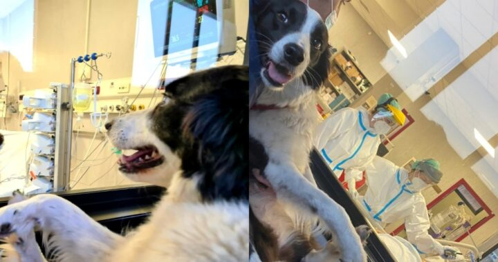 Le bellissime foto di Chicca, la cagnolina che fa visita al suo papà ricoverato in terapia intensiva