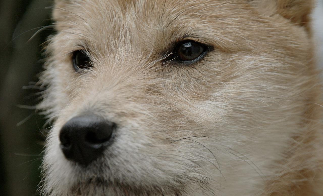 Cucciolo vive in una pozzanghera