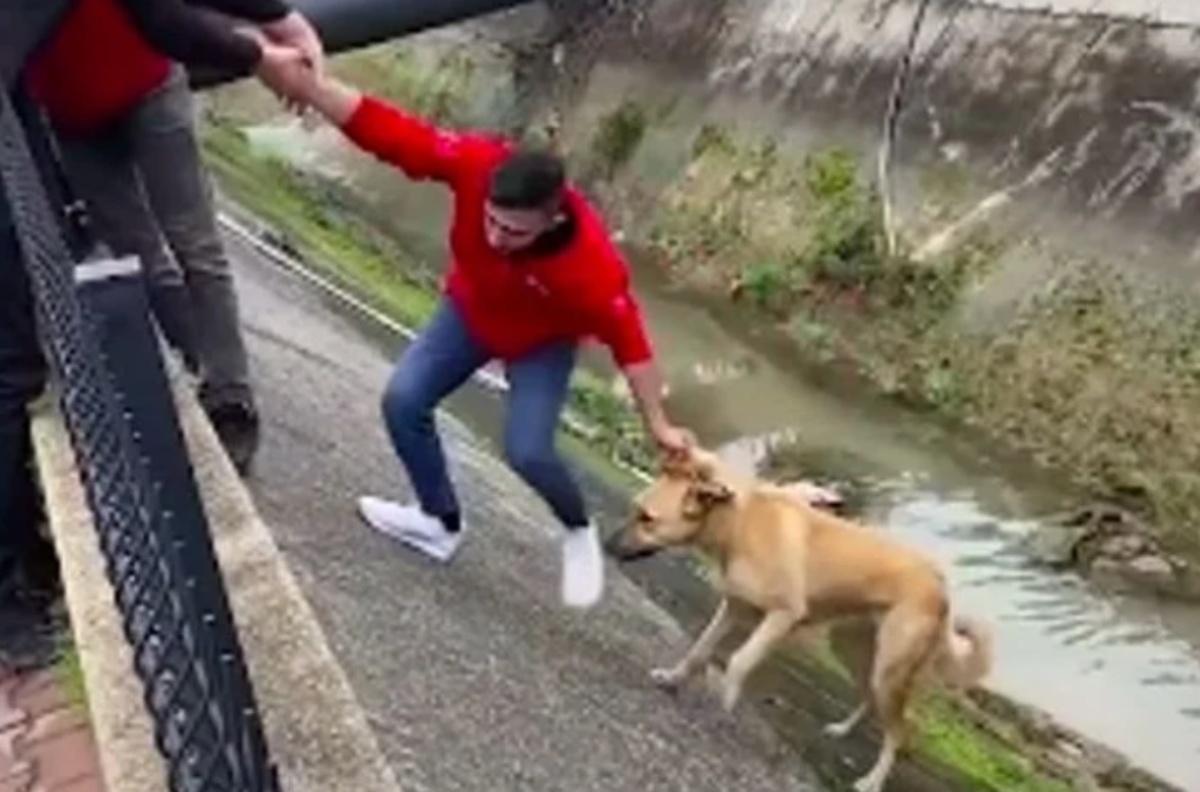 Catena umana salva la vita ad un cucciolo in difficoltà
