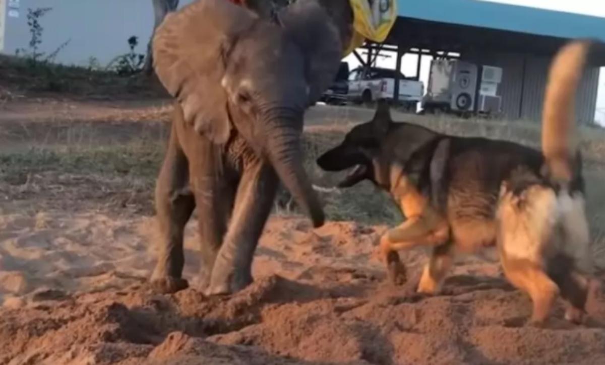 L'amicizia tra Ellie e Duma