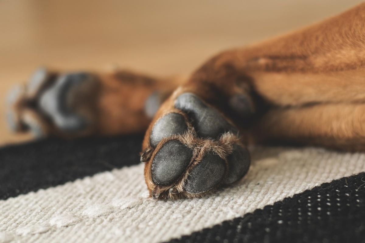 La storia della cagnolina Gaia
