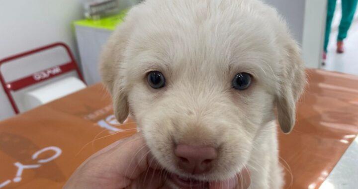 Hola, la cagnolina lanciata da un'auto in corsa è cieca: una notizia che strazia il cuore