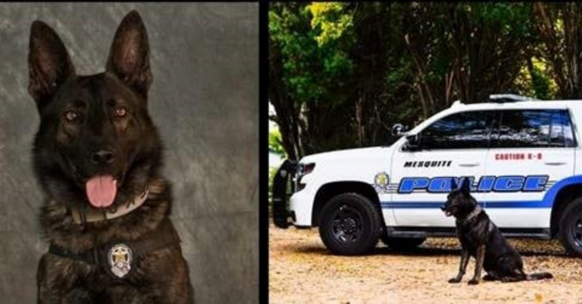 La triste storia del cane poliziotto Kozmo