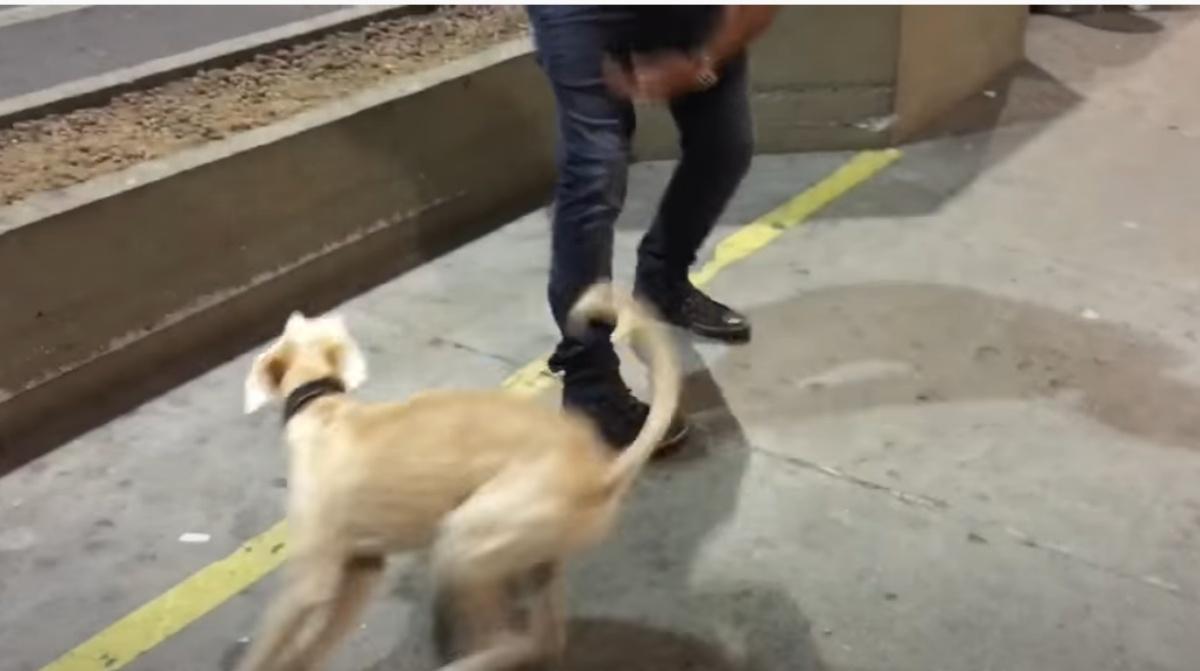 Il dolcissimo video di un cagnolino