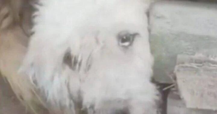 La storia del cagnolino Lamyai