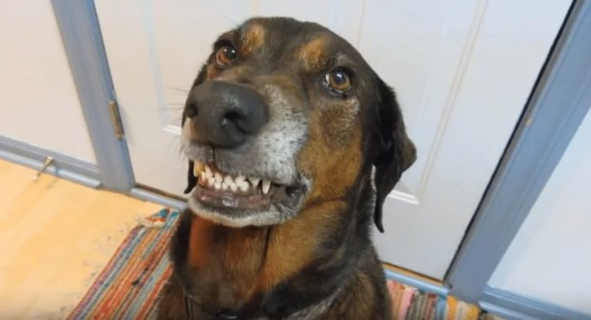 Il video divertente del cane Miller