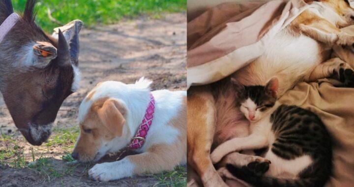 Molly e i suoi amici animali