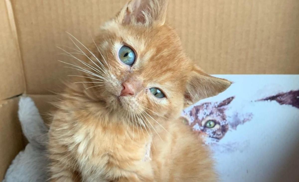 Il gattino Murphy