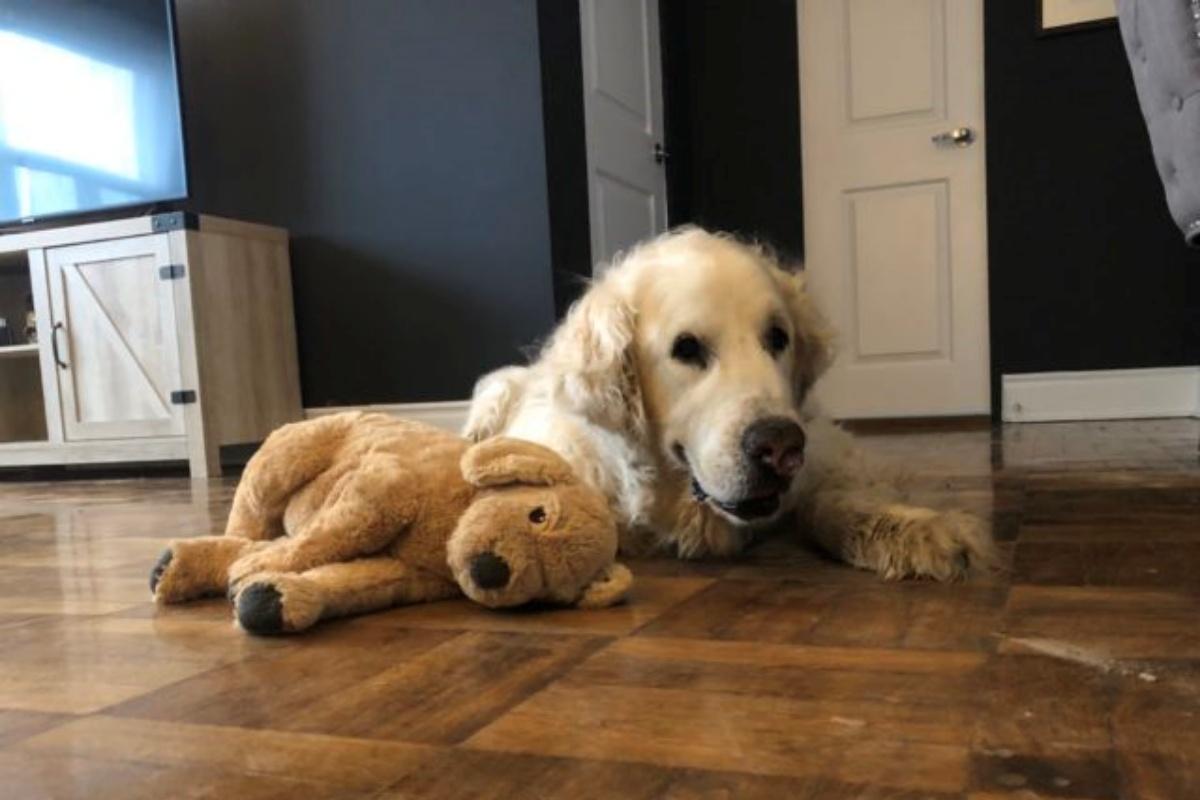 Il triste addio al cagnolino Murphy