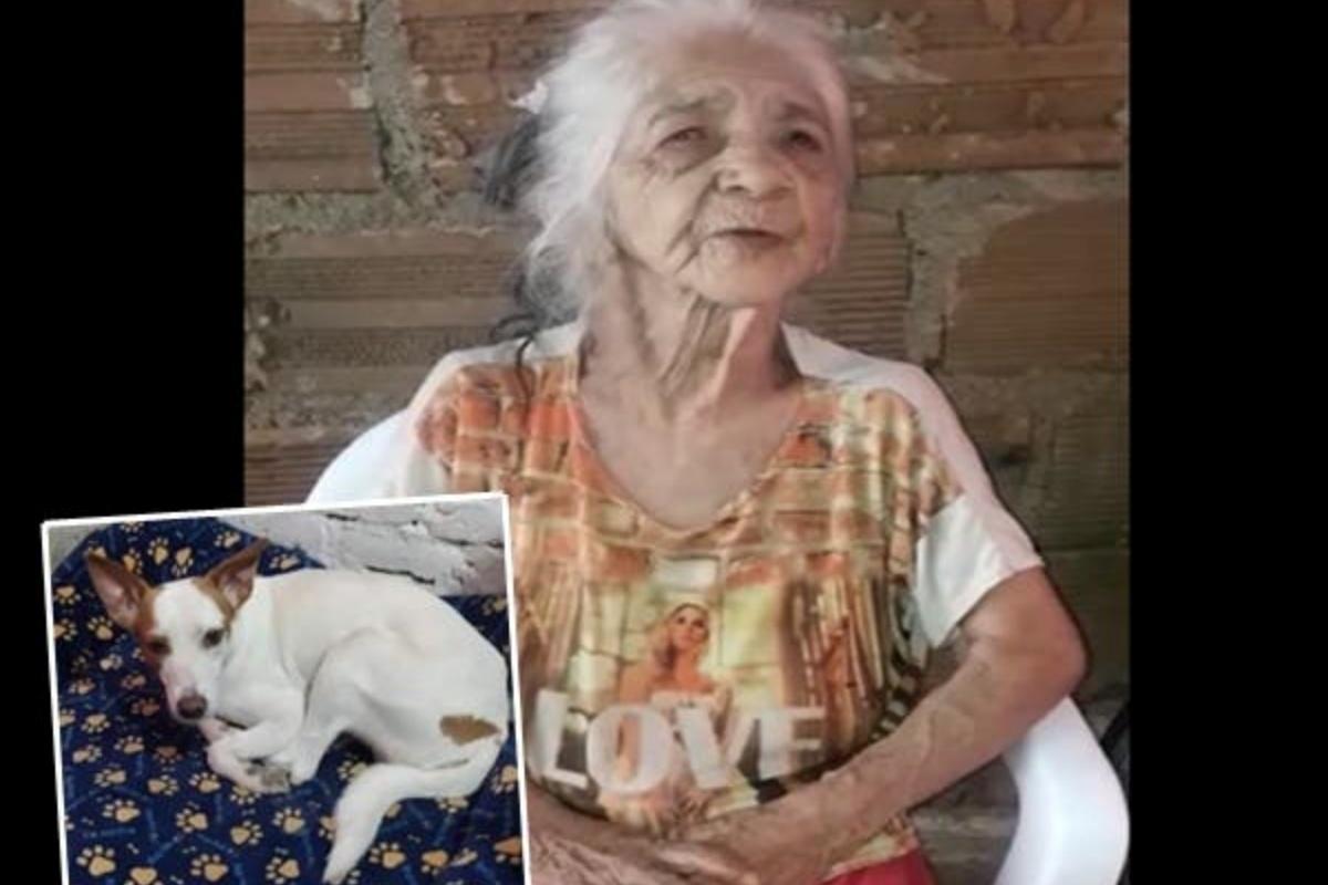 La scomparsa del cagnolino Palomo