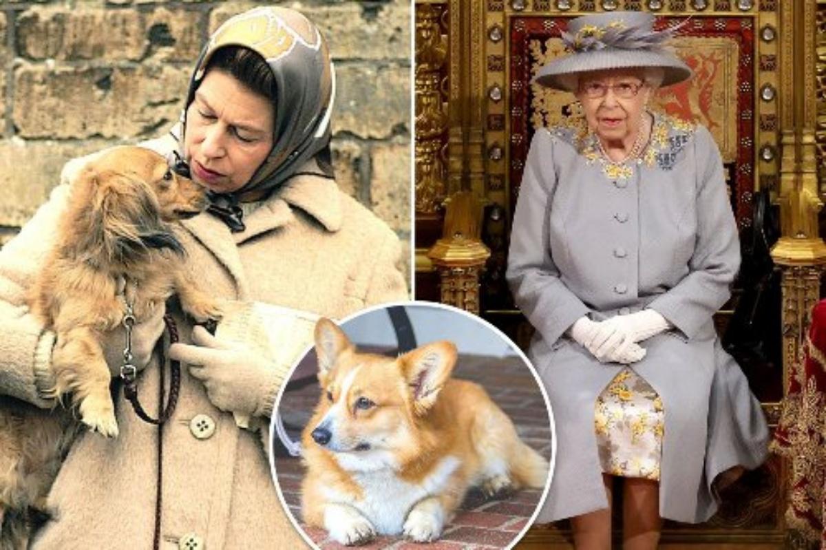 Dolore per la Regina Elisabetta II: morto il cane Fergus