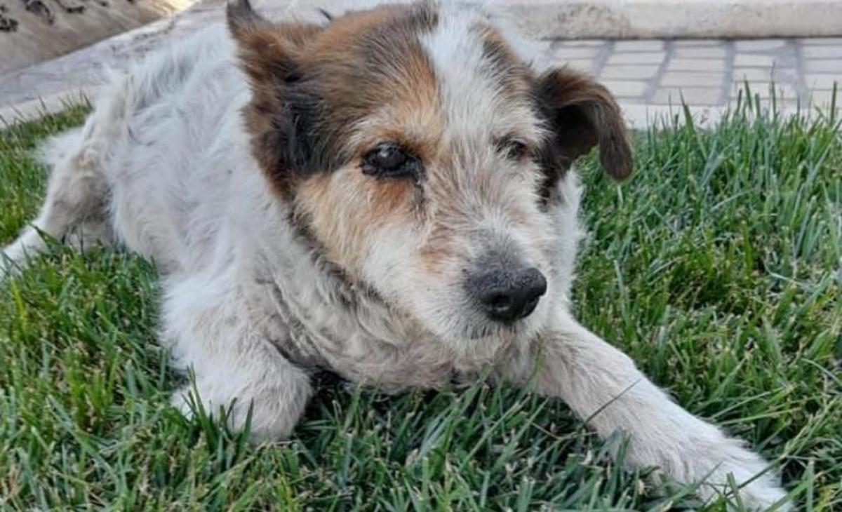 Addio al cane Rufus di Molfetta
