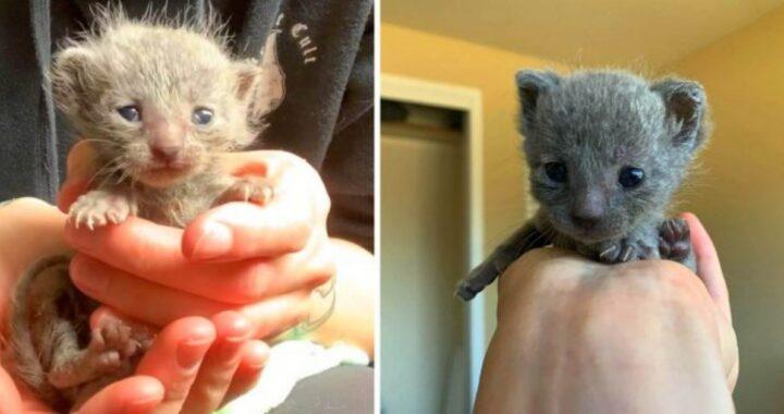 Wild e Brave salvati dalla veterinaria Sara Tiedeman
