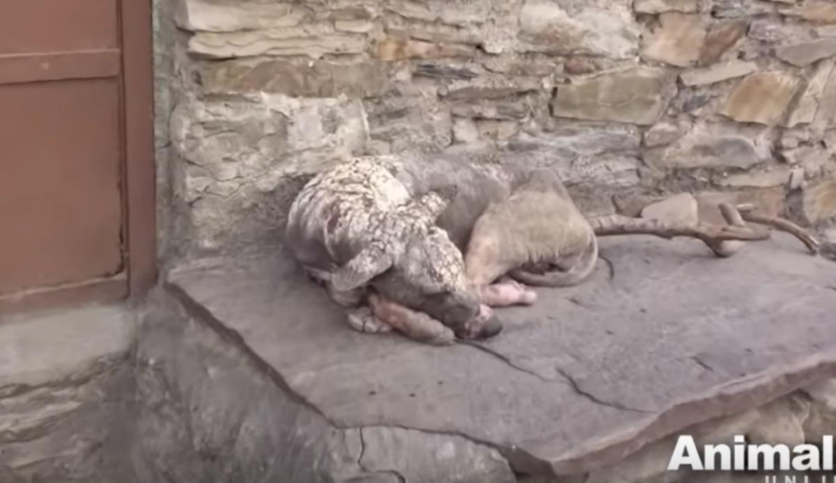 La trasformazione del cane Shylo