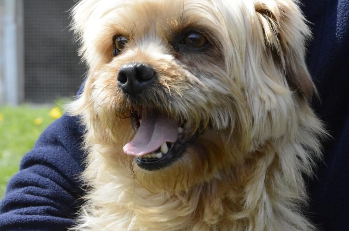 La storia del cane Tennent's
