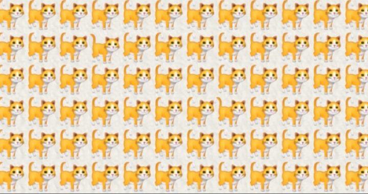 Test, se riesci a trovare 2 gatti diversi in 10 secondi hai un quoziente intellettivo fuori dalla norma