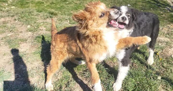 La storia dei cani Uno e Due
