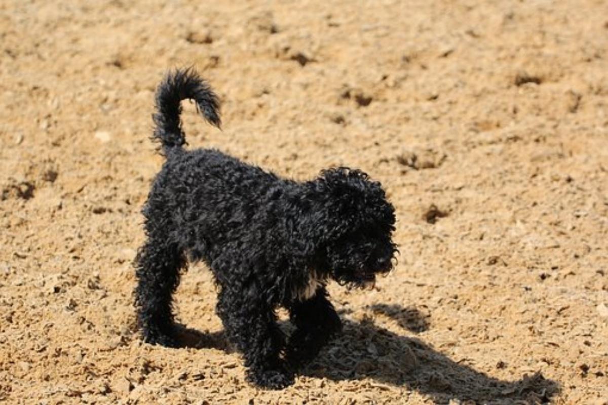 Il cane Zorro è in prognosi riservata