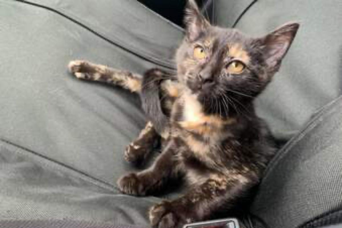 amaretto gatto