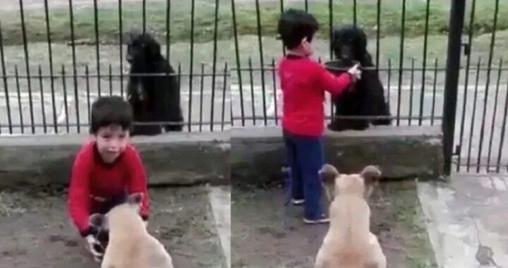 Il gesto di un bambino per un cane randagio, scioglie il cuore del mondo intero