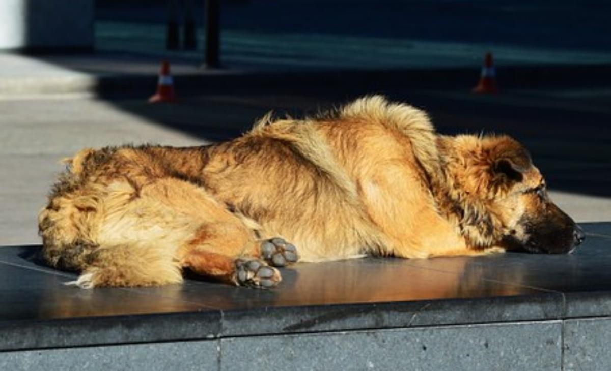 Il gesto per un cagnolino randagio