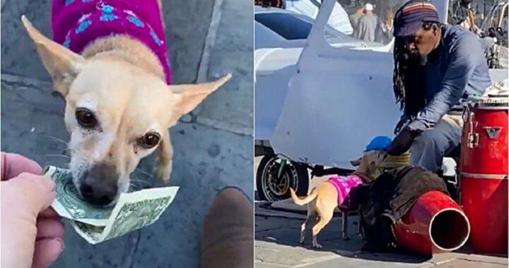 Cane aiuta l'artista di strada