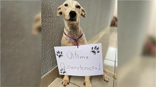 Last chemo for Luma