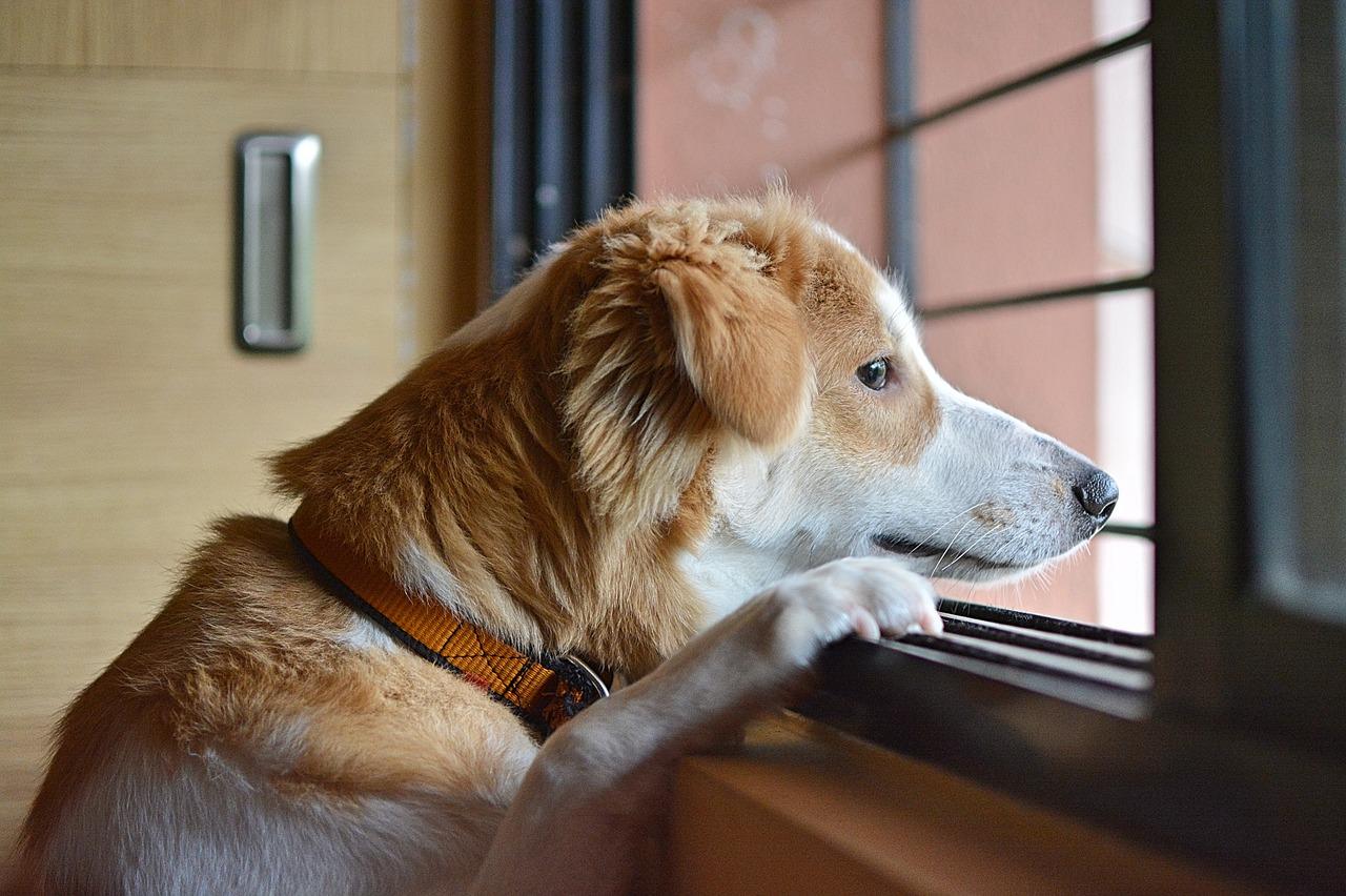 Cane curioso spia il vicino