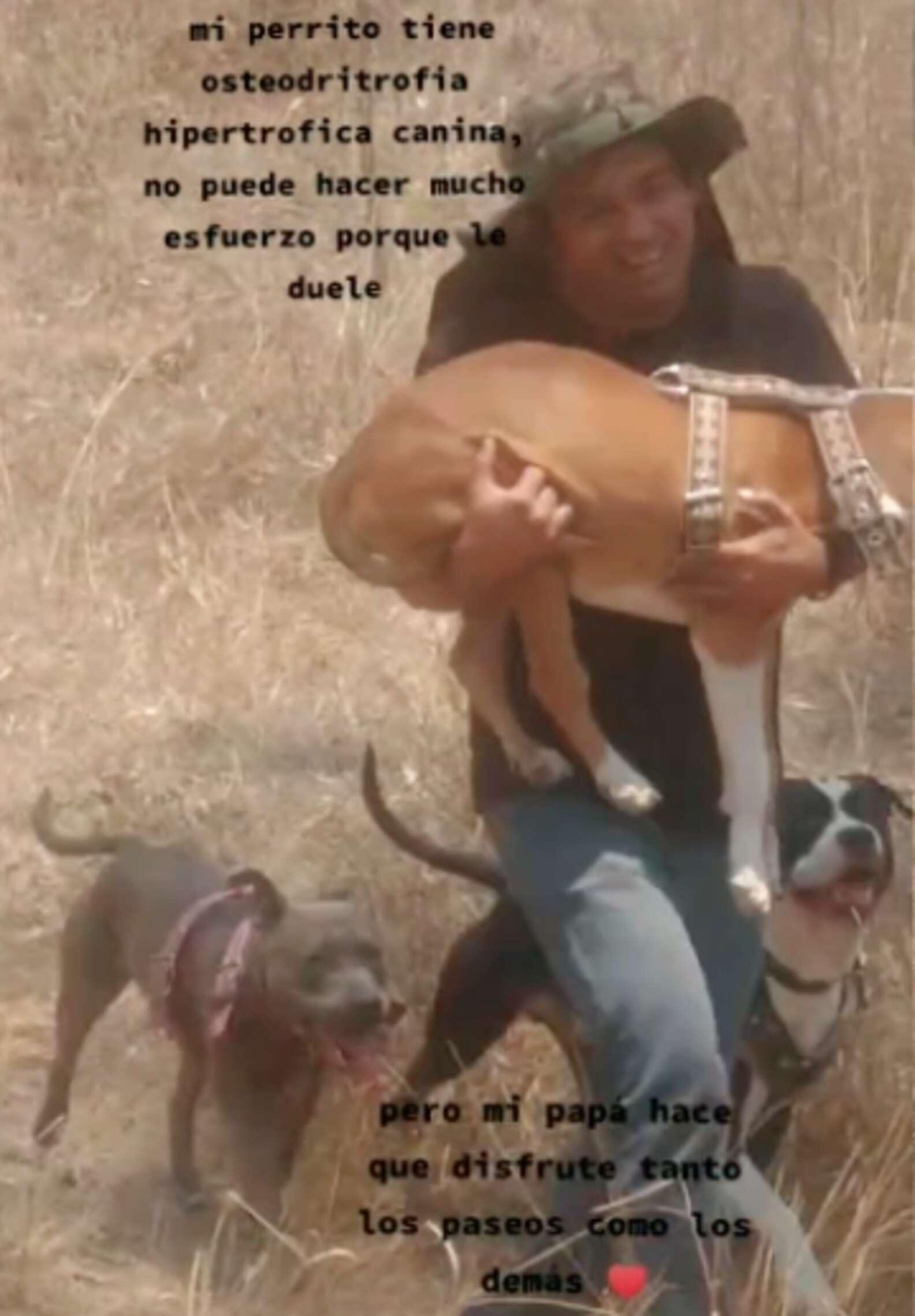 Il cucciolo di nome Canelo