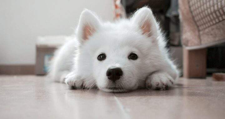 Cane fa la pipì sul divano