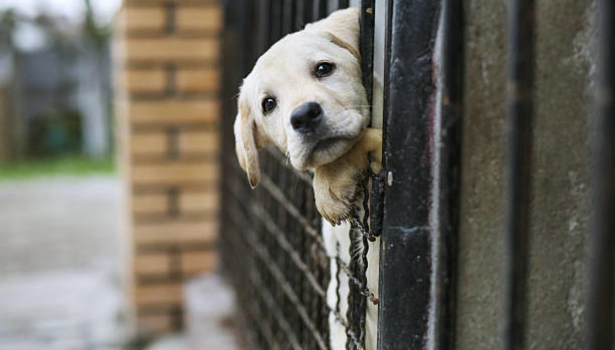 La foto virale di un cane nel canile