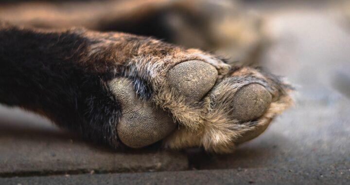 Rabbia a Napoli: cane lanciato dal balcone per mano del suo proprietario