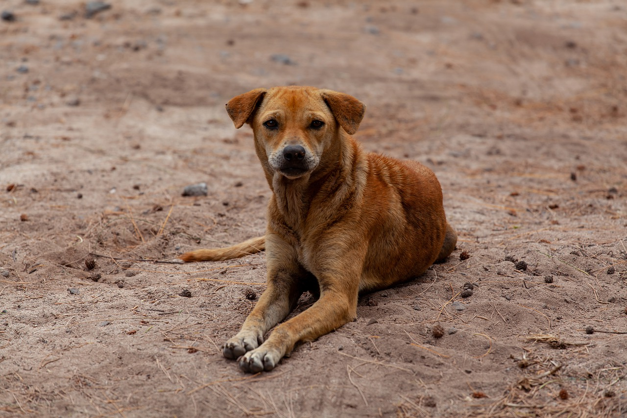 Cane non abbandona il proprietario