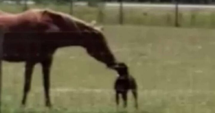 cavallo e cane