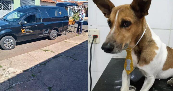 Cane salvato dopo tre giorni senza acqua e cibo