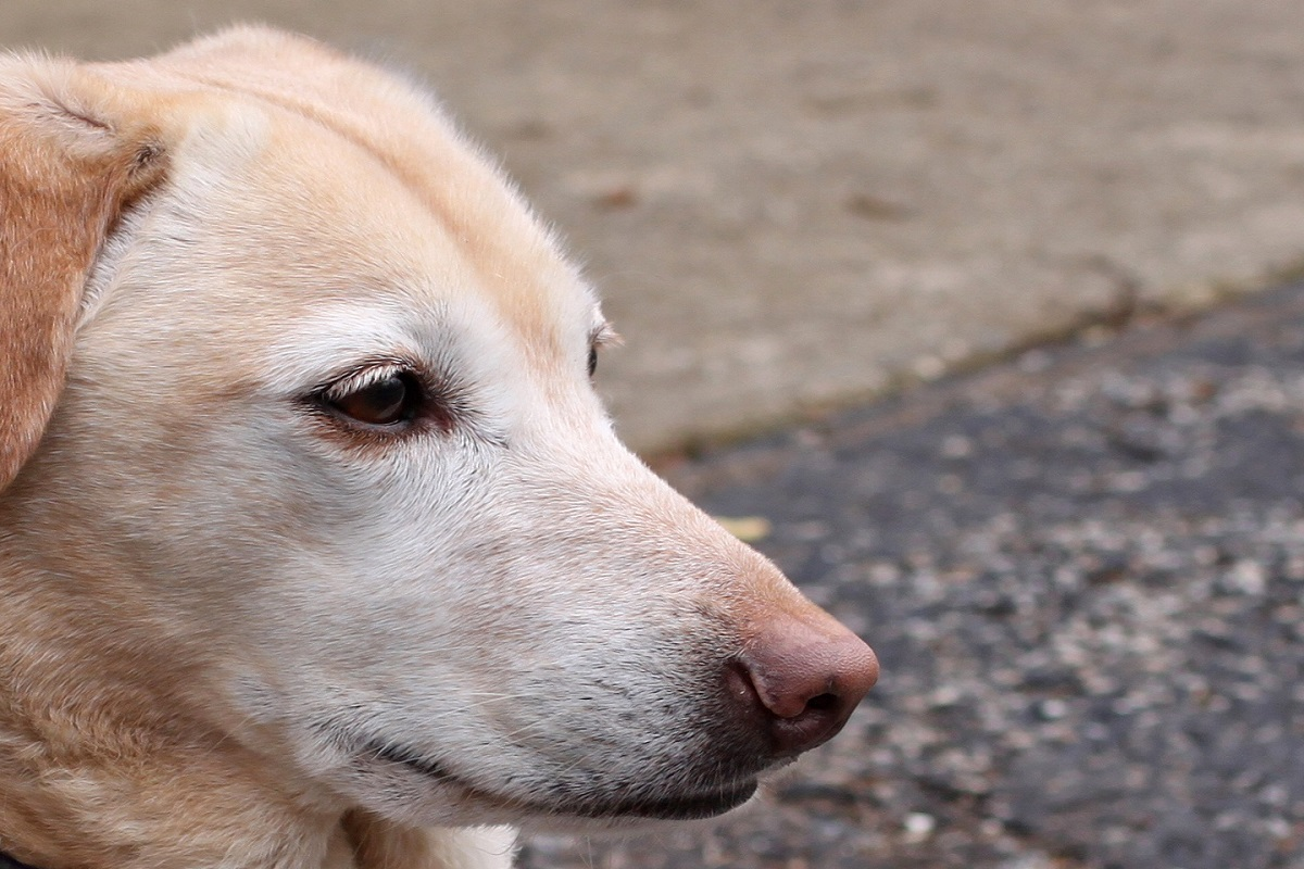 Cane viveva sul tetto