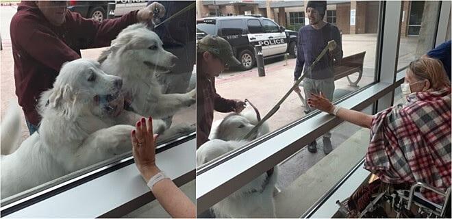 Cuccioli alla finestra in ospedale
