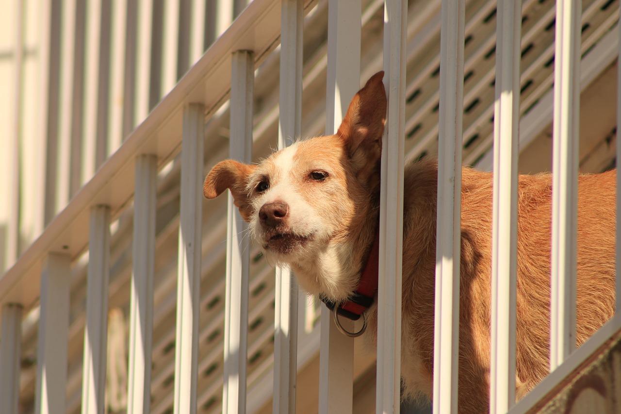 balcone per i cani