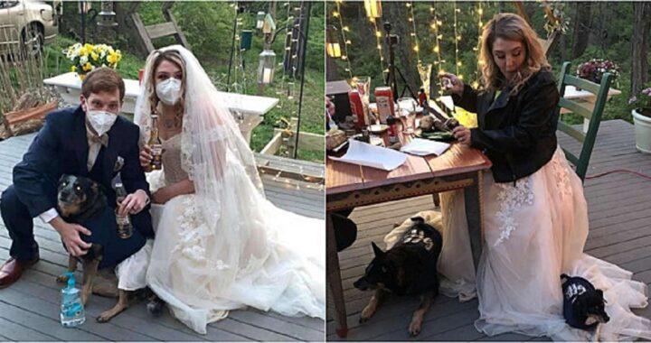 Cuccioli come damigelle d'onore al matrimonio dei giovani sposi
