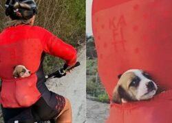 cane in bici