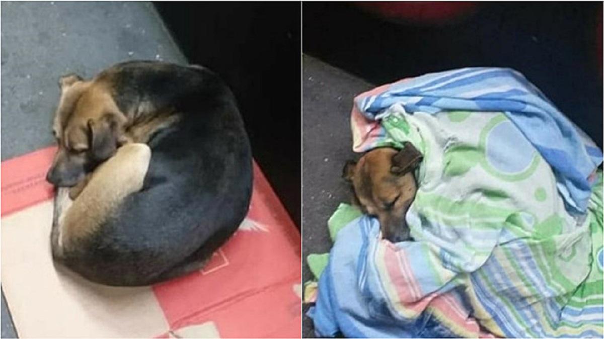 Cucciolo di strada coperto