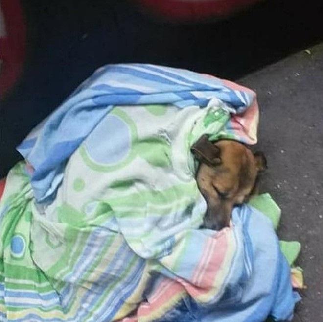 Cane coperto nella notte