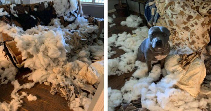 Cucciolo distrugge il divano