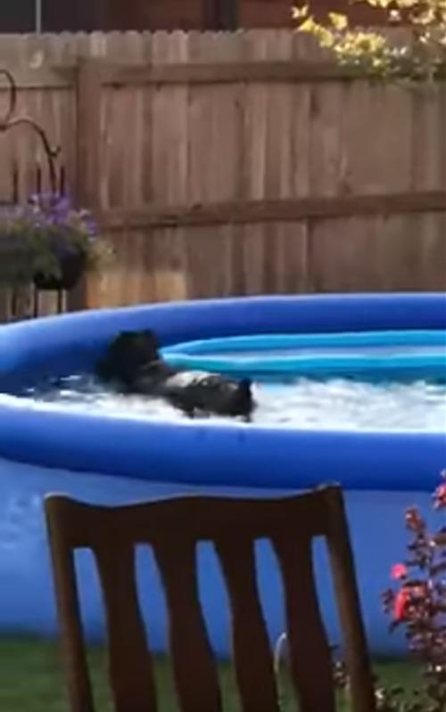 Cane si diverte in giardino