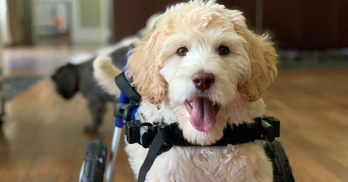 Cucciolo paralizzato abbandonato